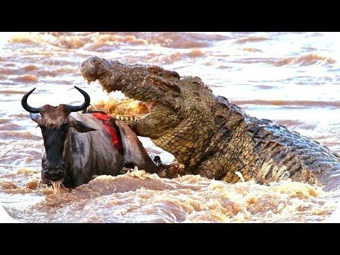 TOP 10 ANIMALS SAVE THEIR CALF FROM DEATH |