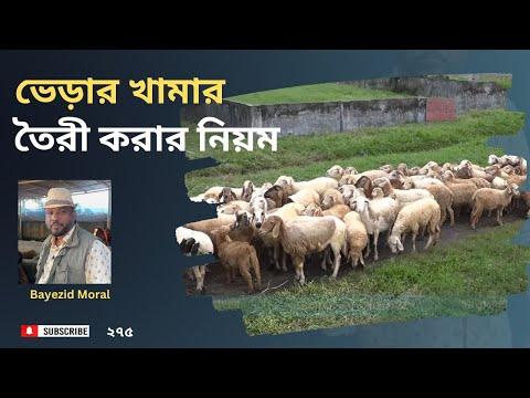Training Module - Sheep farm, বেকার ও প্রবাসীদের জন্য, ভেড়ার খামার তৈরী করার নিয়ম, مزرعة الأغنام