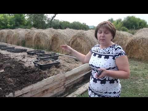 Вопрос: Как сделать чай с червями (для растений)?