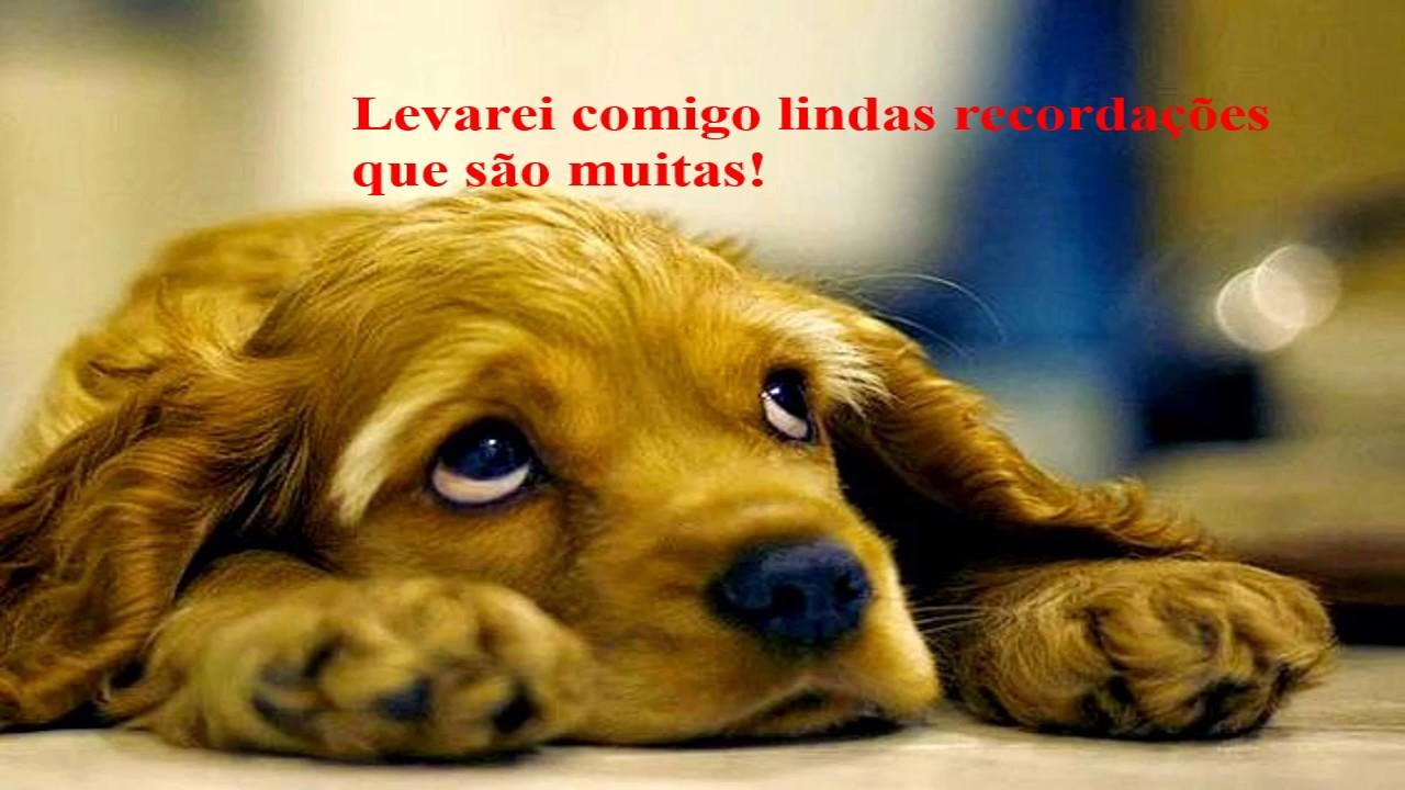 Despedida De Um Cão: Mensagem De Despedida De Um Amigo. Muito Emocionante,linda