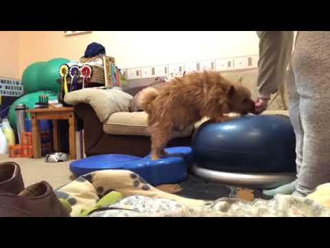 Cooper Conditioning Homework Feb 18