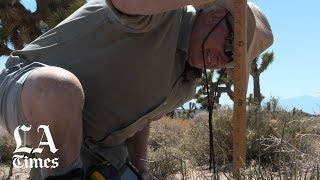 Climate change takes a toll on Joshua trees