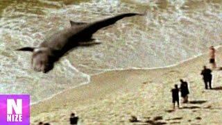 Megalodon wurde an den Strand gespült? - Fake oder Echt