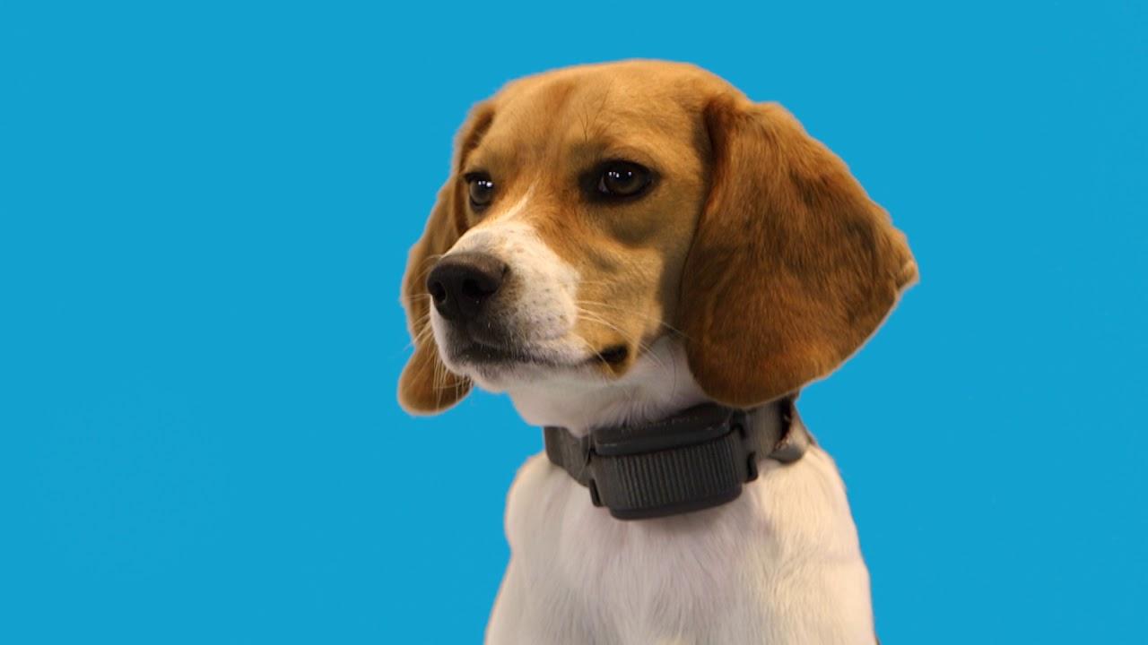 Premier Pet Rechargable bark collar  GBC00-16296