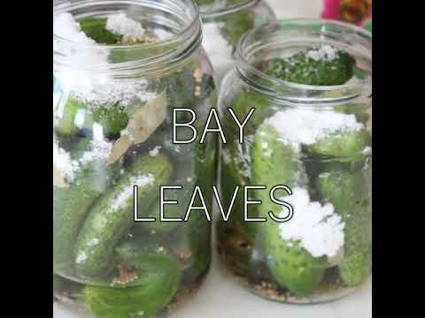 Homemade pickled cucumbers recipe
