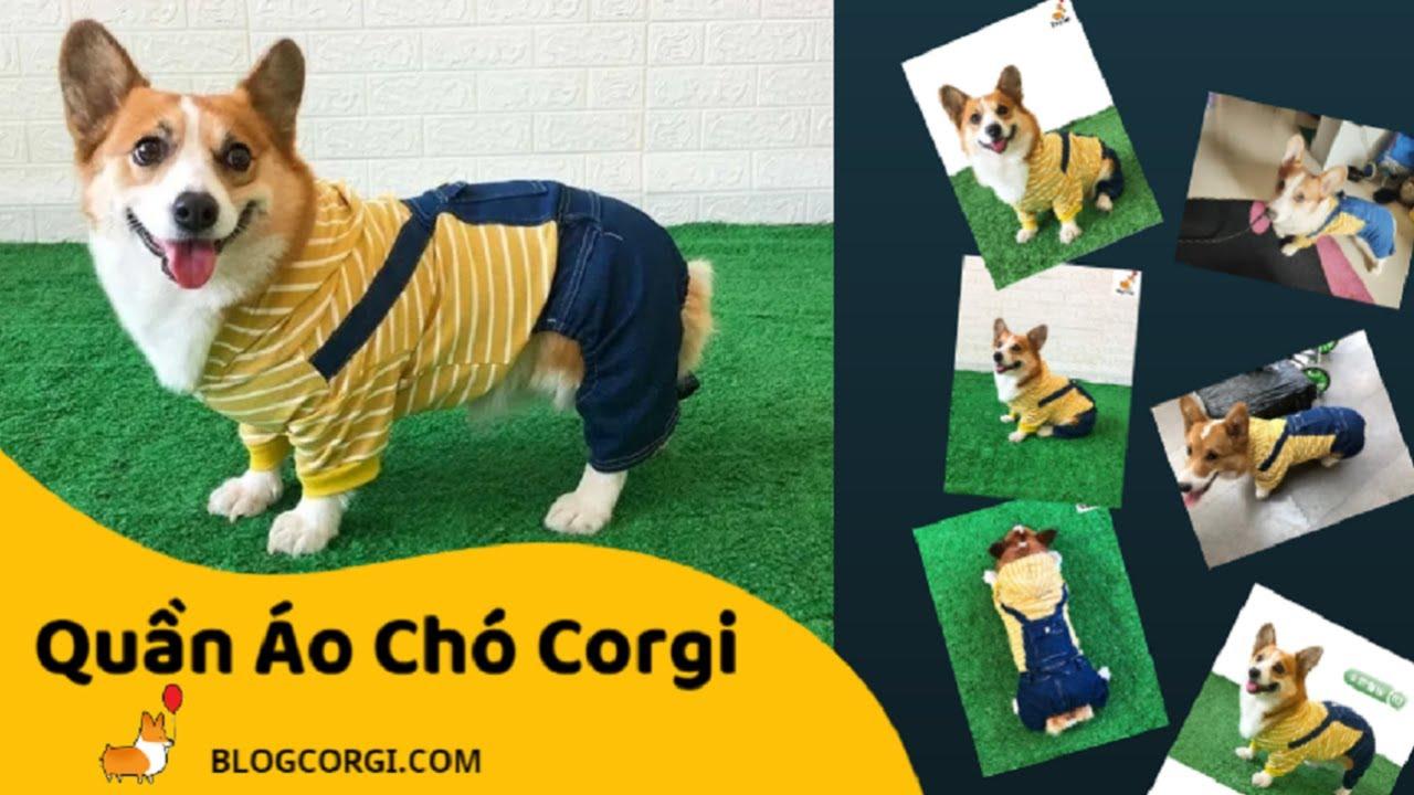 #03 💖Áo Quần Cho Chó Corgi🐹 Hàn Quốc Siêu Cute [BlogCorgi com]   Tin Tức về áo quần cho chó