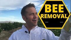 Bee Removal Phoenix | Abello Bees