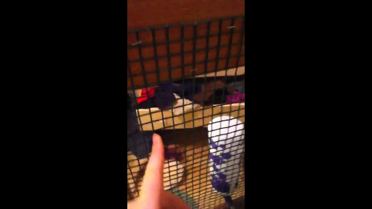 How To Make A Homemade Rat Cage