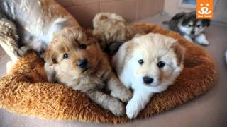 At-risk shelter puppies come to Best Friends Animal Sanctuary