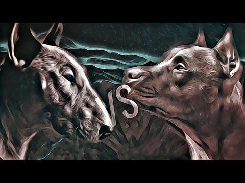 Bull terrier VS Pitbull fight