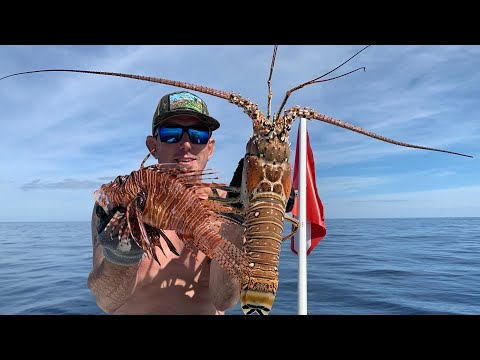 Giant Lobster Catch Clean & Cook ( SWIMMING With MANATEE'S )