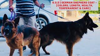 G.S.D | German Shepherd Coat – [Colors, Length, Health, Temperament & Care] Puppy | Dog | BholaShola