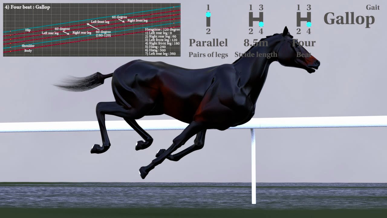 hight resolution of gallop horse gait diagram