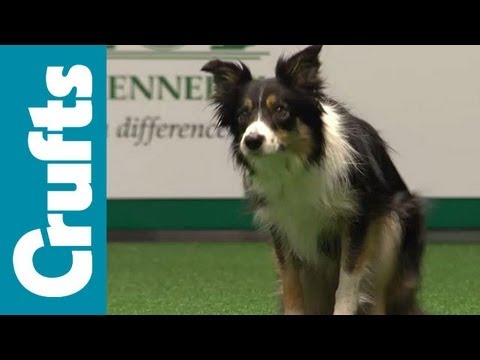 Crufts Semi-Final Large Breed Agility Team Contest  | Crufts 2012