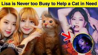 Lisa & Rosé Kind Gesture Towards a Cat/ Jennie Has Been Listening to This Artist