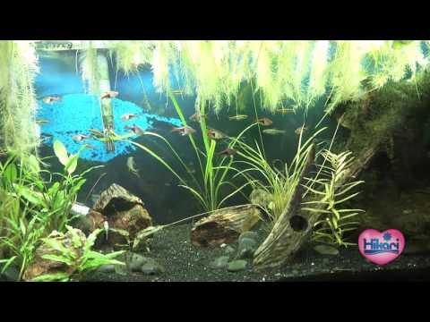 Wet Spot Fish Store Nano Fish, Cichlids And Planted Tanks