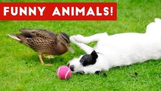 Animals are so funny that you will die laughing Weekly Compilation 2017 | Funny Pet Videos