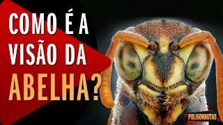 como  a viso da abelha e de outros 4 animais   5 vdeos absurdos