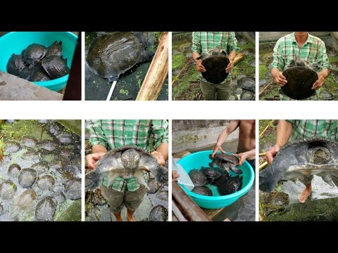 Tham quan mô hình nuôi cua đinh công nghệ cao Long Hồ huyện Phước Long   Quê tôi Bạc Liêu.