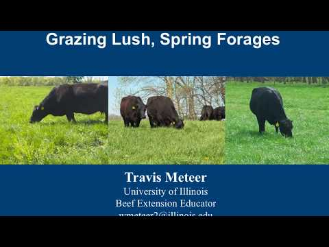 Grazing Lush Forages