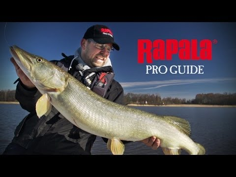 Rapala Pro Guide | Spin Fishing For Spring Pike (English Subtitles)