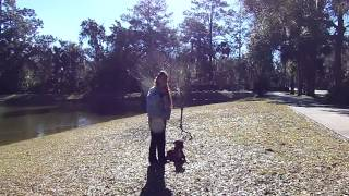 Off Leash Training With Distractions Boxer Lulu Dpgtra Remore Pager