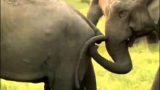 Секс в природе  развязные животные отжигают