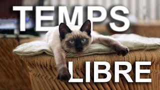 TEMPS LIBRE - PAROLE DE CHAT