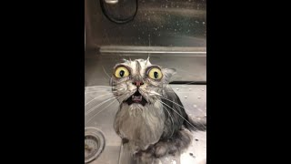 Funniest Animals 😻- Best Of The 2020 Funny Animal Videos 🐶 -( animals fail ) Cutest Animals Ever 🐶😺🐟