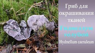 видео Hydnellum, или Гиднеллум