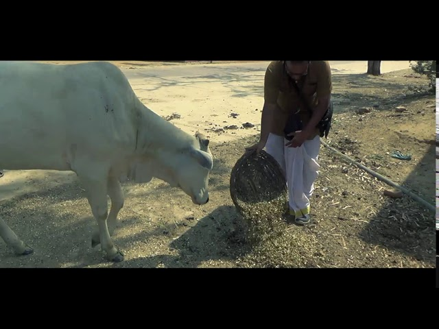 Friends of Cows | 18.09.2020