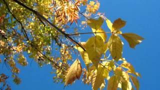 #Осенняя мелодия# Самая красивая осенняя песня