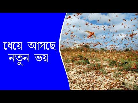 রাজস্থানে শস্যক্ষেত ছারখার করল পঙ্গপালের দল। Locusts attack|Jaipur|India