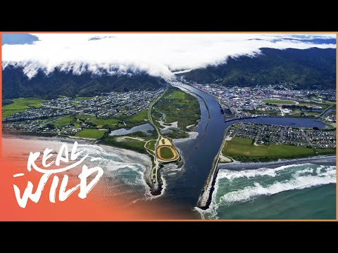 Wild West Coast [New Zealand Documentary] | Wild Things