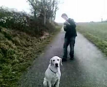 Jtv Presents Tollwütiger Hund