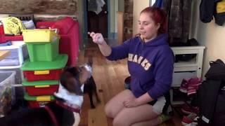 7 Tricks in 7 Days - (My Foster Dog) Freedom Dog Rescue