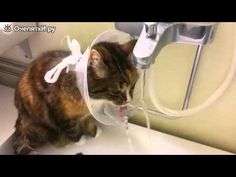 Как сделать воротник кошке своими руками из пластиковой бутылки 54