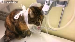 Защитный воротник   находка для кошки!
