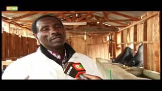 Smart Farm - Dairy Farmer In Meru