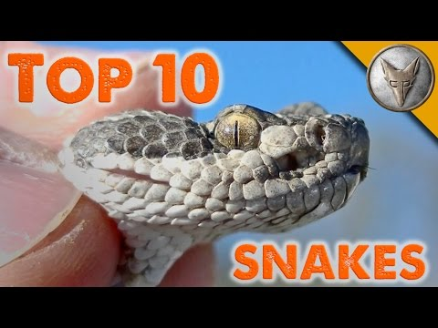 Top 10 Snake Encounters!
