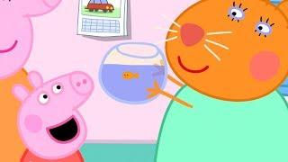 Peppa Pig en Español Episodios completos | Peppa Pig a al veterinario | Pepa la cerdita