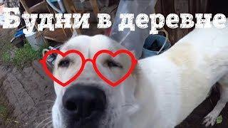 Деревенские будни // Психоз у животных