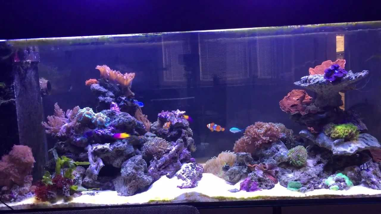 450 liter meerwasser aquarium youtube for Aquarium 10 litres