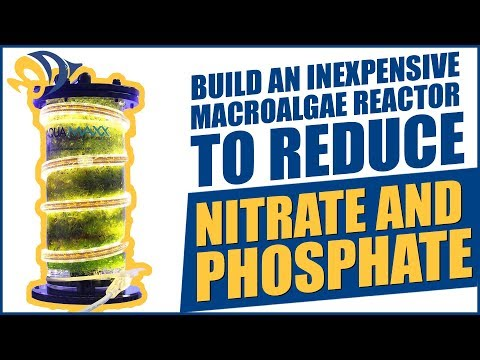 Build an inexpensive Macroalgae Reactor to reduce Nitrate and Phosphate