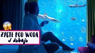 Żyję pod wodą!  Rekiny, delfiny i płaszczki - Dubai Vlog   Agnieszka Grzelak Vlog