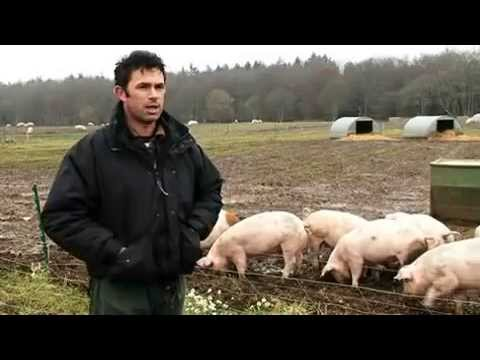 A day in the life of an ethical, environmentally responsible pig farmer