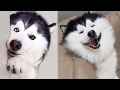 Cute Dog and Cat Vine Compilation 2019 | Cute Pets Vine Videos #1