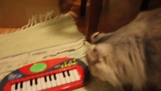 Cats get to know musical instruments
