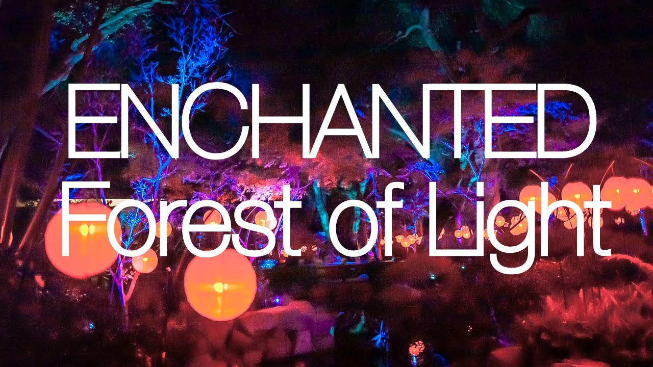 Enchanted forest of light descanso gardens youtube - Descanso gardens enchanted forest of light ...