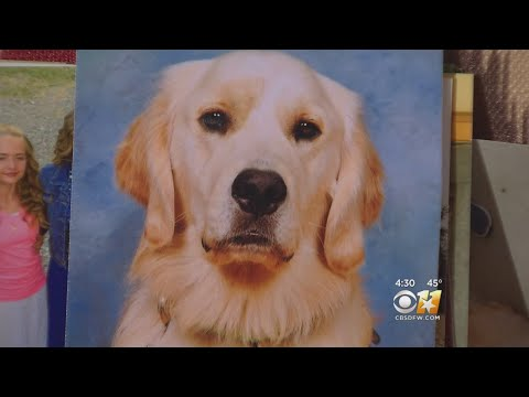 Teen's Service Dog Shot And Killed Outside North Texas Home